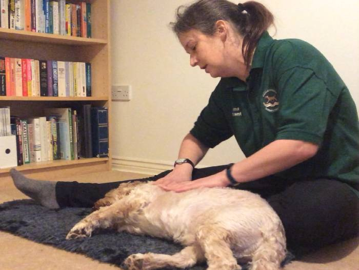 Relaxed dog having a canine massage therapy session